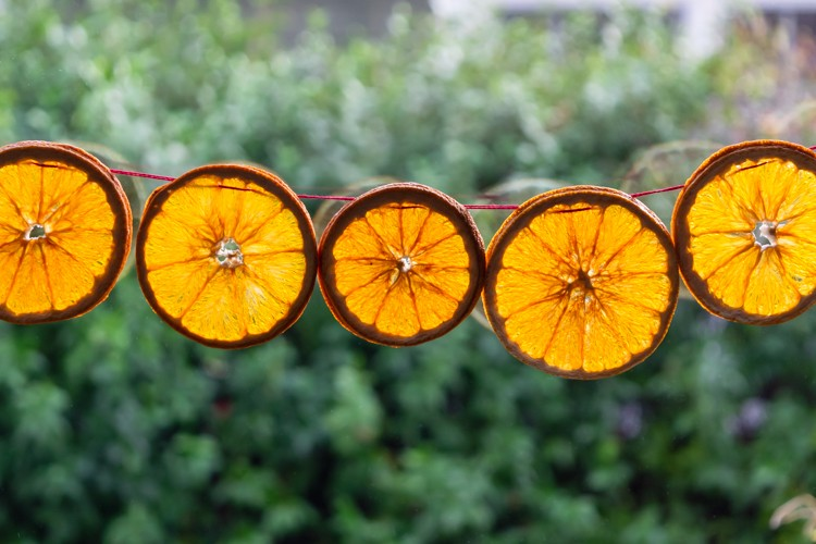 Dried orange slices with light shining through look like stained glass.
