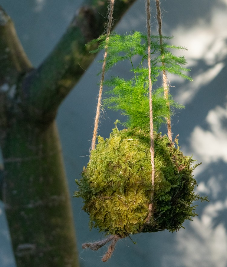 How to Make Japanese Kokedama Moss Balls